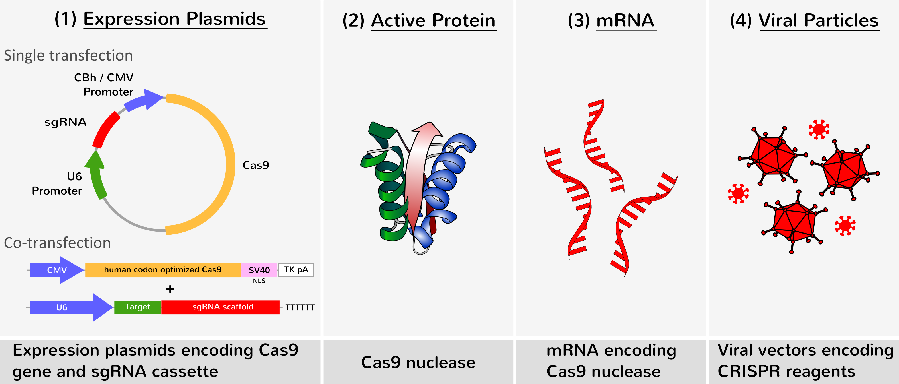 Crispr Cas9 Genome Editing Transfection Reagents