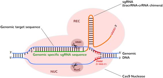 CRISPR/Cas9 Genome Editing Transfection Reagents - ozbiosciences